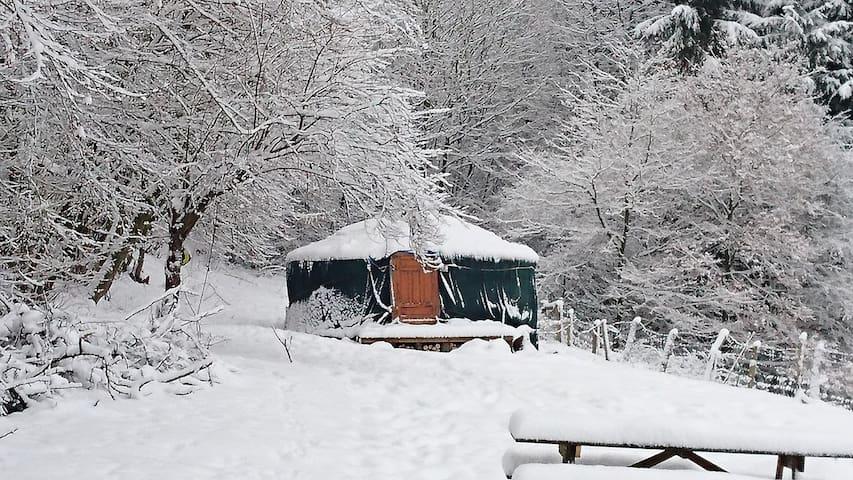 Harry's Place a warm Yurt with a beautiful view! - Marche-en-Famenne - Jurta