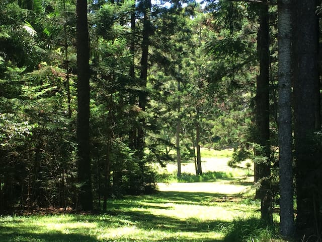 Extra large cabin in awesome hoop pine forest - Uralba