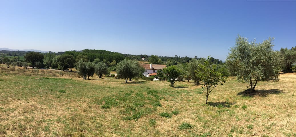 A Padaria - Country house with Swimmingpool - Coimbra - Huis