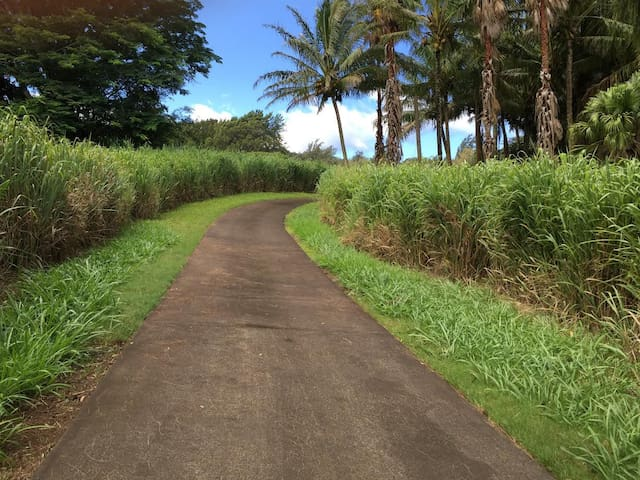 Hawi Hideaway;  A place where dreams do come true. - Hawi