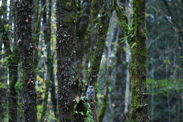 Quiet, Wooded Wetland Studio - Olympia - Lägenhet