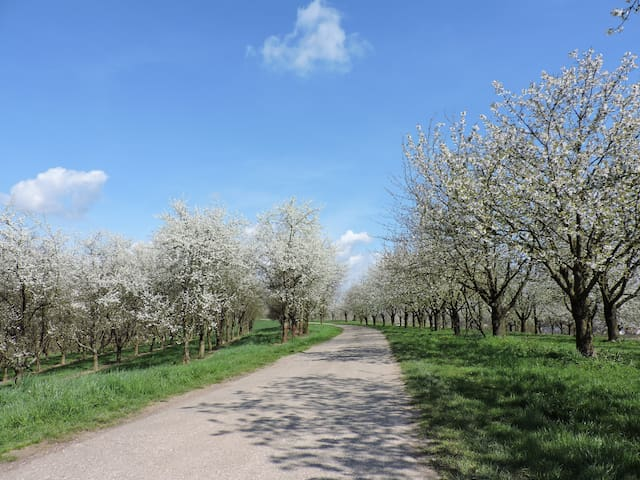 """Ferienwohnung """"Im Feldle"""" - Appenweier - Huoneisto"""