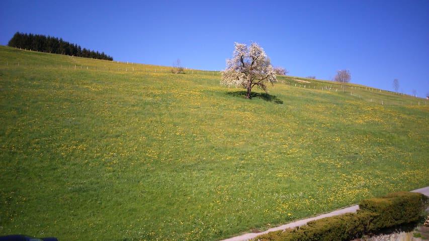 Sonnenbalkon im Bregenzerwald - Langenegg - Lägenhet