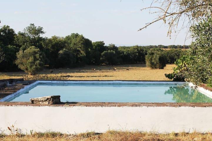 Typical Alentejo farm - Arcos - Villa