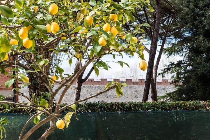 Lemon House - Pisa - Departamento