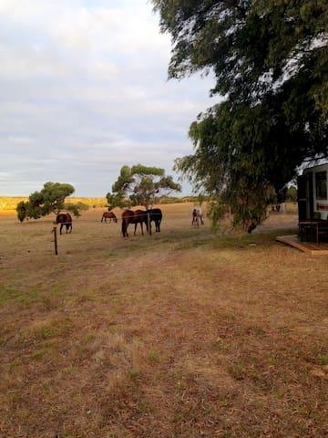 Caravan Farmstay - Deepdene - Husbil/husvagn