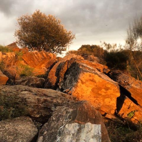 Portugal Valley's Olive Paradise - Beja - Tienda de campaña
