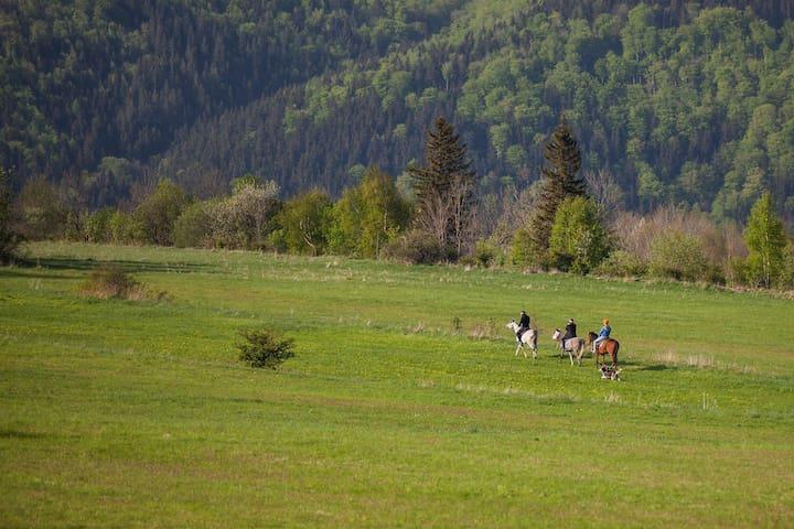 Nature & horses 4 mountain lovers! - Janowice Wielkie - Dağ Evi