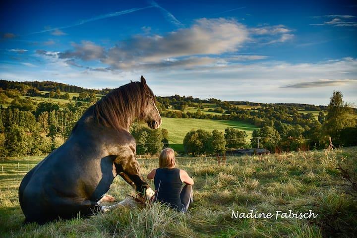 Ferienwohnung auf dem Pferdehof - Natur pur! - Schotten