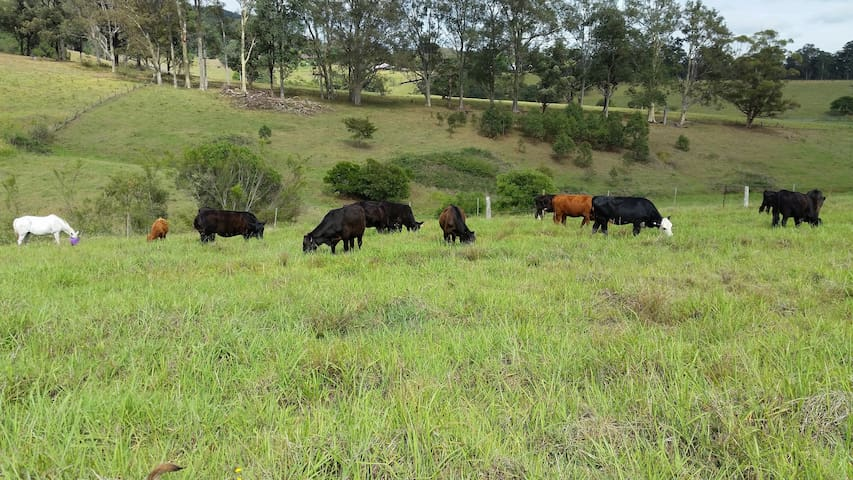 Farmstay - an Aussie farm with a friendly family - Black Hill - Bed & Breakfast