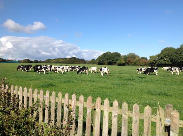 Cow View, Hook Norton - Hook Norton - Bed & Breakfast